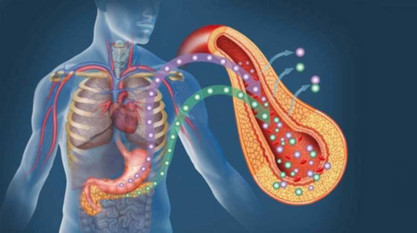 Páncreas: Motor para metabolizar el azúcar