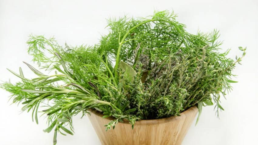 Plantas antibichos: Dile adiós a las picaduras del verano