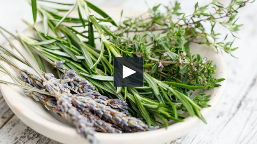 Cocina con plantas silvestres