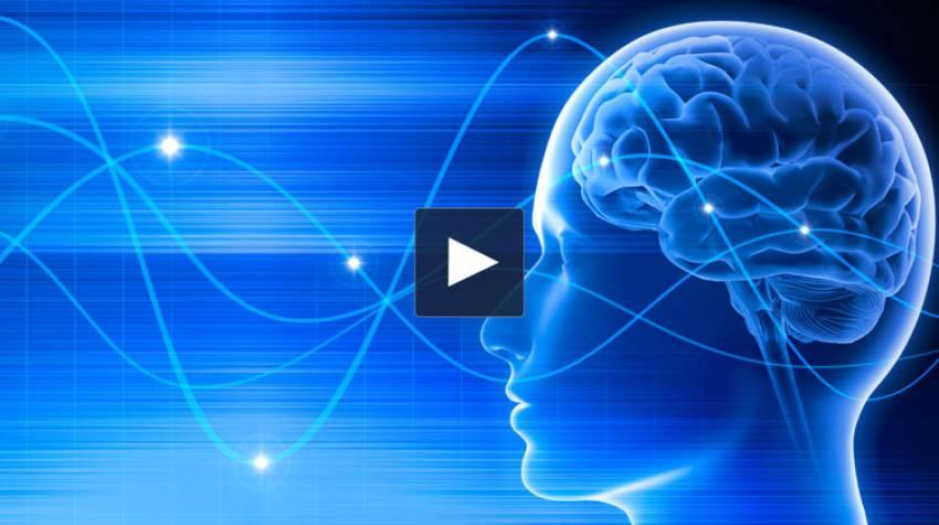 El cerebro, nuestro disco duro