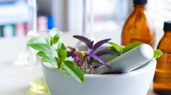 Fitoterapia. Plantas medicinales: manual de uso